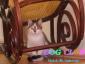 Opieka nad kotami Bedoń Przykościelny - Hotel dla Zwierząt DOG CLUB  tel.698466060
