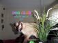 Opieka nad kotami Pensjonat dla zwierząt - Bedoń Przykościelny Hotel dla Zwierząt DOG CLUB  tel.698466060