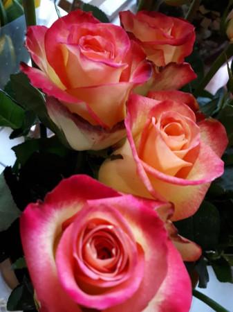 żółto-różowe żywe...