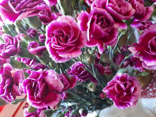 Różowy goździk...