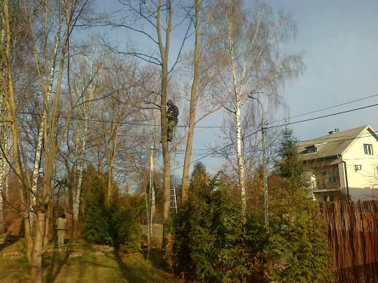 Wycinka drzew...
