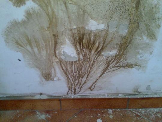 grzyb-domowy-ekspertyza-mykologiczna