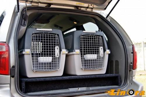 transport zwierząt...